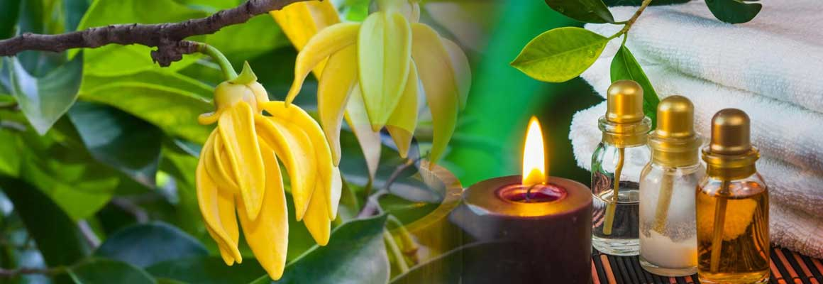 Ylang Ylang Oil Natural Oil