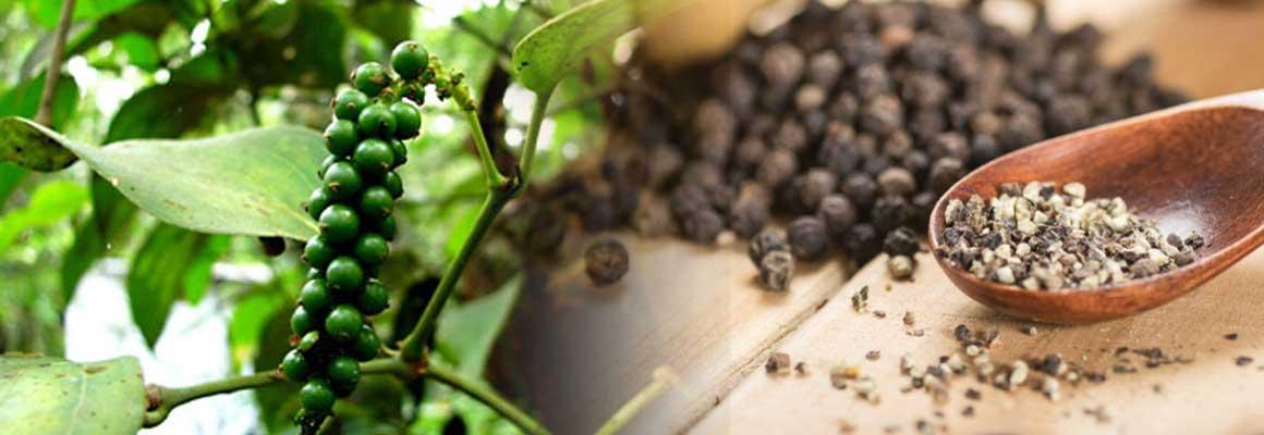 Black Pepper Oil AOS