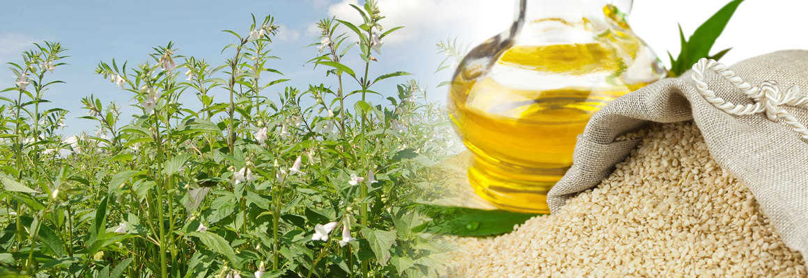 Sesame Seed Oil Natural Oil