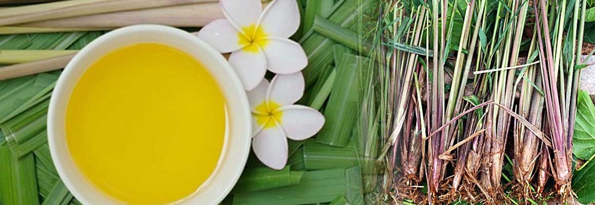 Citronella Oil Natural Oil