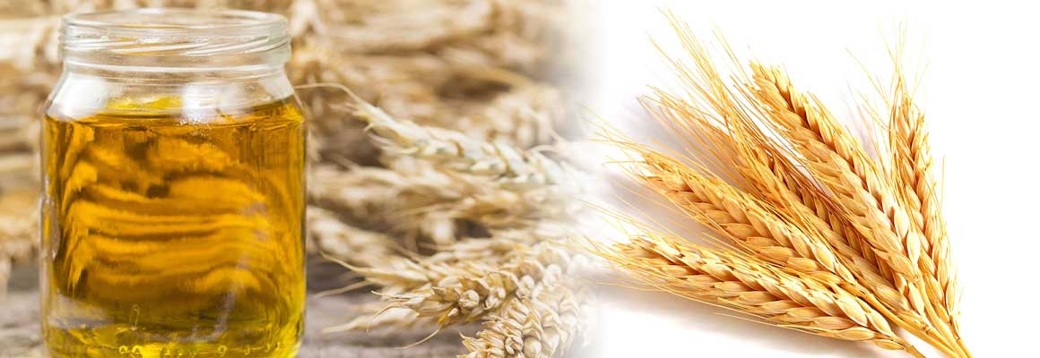 Wheat Germ Oil Natural Oil