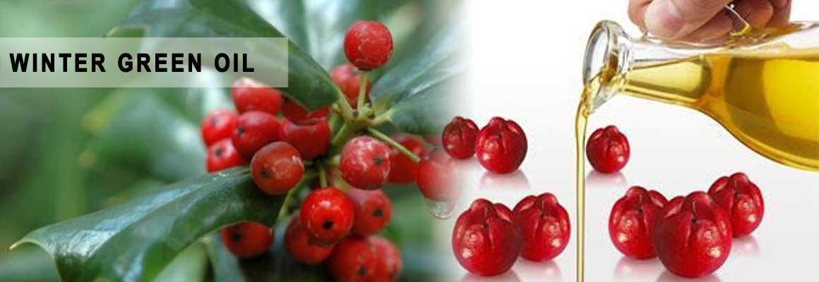 Wintergreen Oil Natural Oil