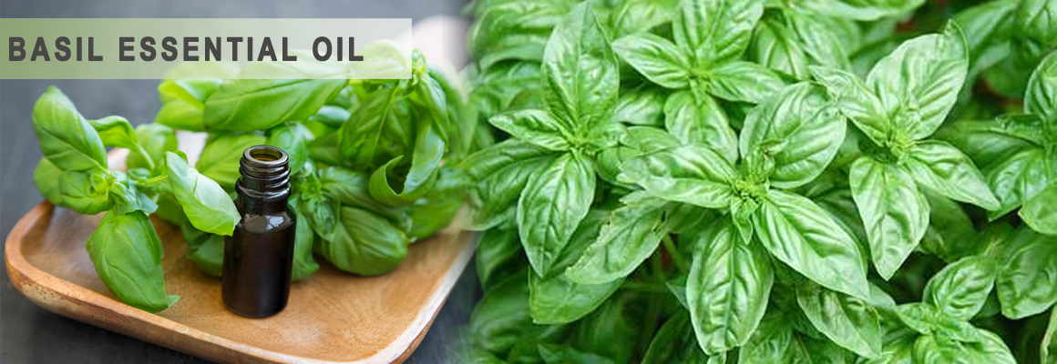 Aos Products Basil Natural Oils