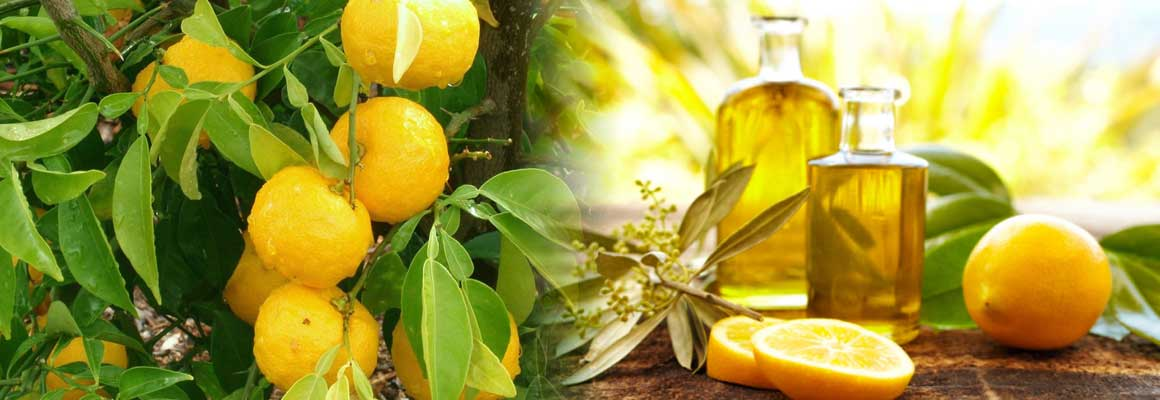 Lemon Essential Oil Natural Oil