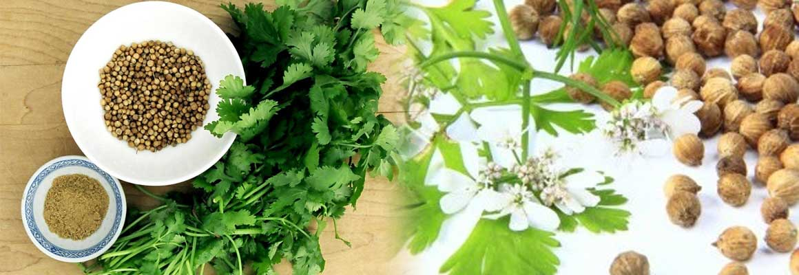Coriander Seed Natural Oil