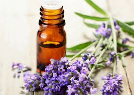 Benefits and Uses of Lavender Oil Blog