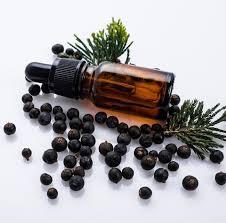Juniper Berry Essential Oil Blog
